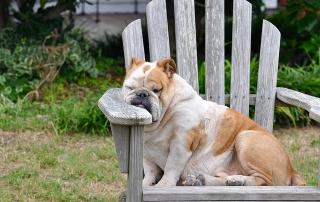 שינה והשמנה
